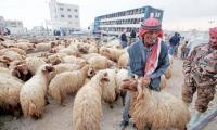 الحكومة تبحث ملف فتح سوق الاضاحي