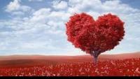أغرب 5 قصص حدثت في عيد الحب