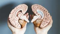 ما لا تعرفونه عن الدماغ البشري