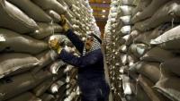 الأردن يشتري 60 ألف طن من الشعير