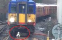 أوزة تعطل قطاراً بريطانياً والشركة تعتذر
