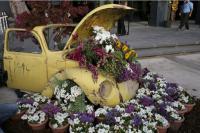 ملكاوي يرعى إفتتاح معرض عمان للأزهار في جاليري راس العين
