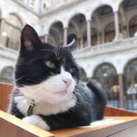 قط الخارجية البريطانية يعلن تقاعده