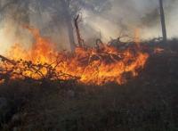بحث التعاون للحد من عملية انتشار الحرائق في إربد
