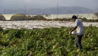 4 توجهات حكومية لتشغيل الشباب بالزراعة