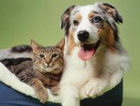 بسبب كورونا .. أول مدينة صينية تحظر تناول القطط والكلاب