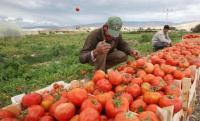 ارتفاع اسعار المنتجين الزراعيين باذار الماضي 12%