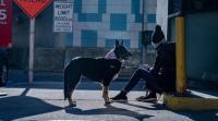 تدريب كلاب لاكتشاف الإصابات بكورونا