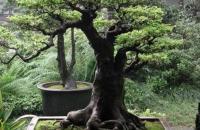 رجل أعمال يشتري شجرة بـ 1.1 مليون دولار