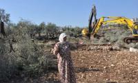 الاحتلال يقرر قطع ألفي شجرة زيتون جنوبي الضفة