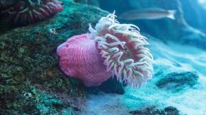 لماذا ظهرت أولى الكائنات الحية المعقدة في أعماق المحيطات؟