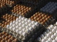 المستهلك تدعو الى مقاطعة شراء بيض المائدة