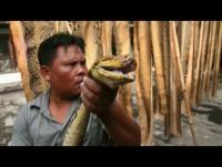 عندما يصبح الثعبان حقيبة - جولة داخل مسلخة الثعابين المرعبة - فيديو