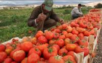 انخفاض أسعار المنتجين الزراعيين خلال خمسة أشهر 15.5%