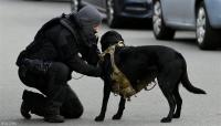 كلاب الشرطة الهولنديّة تلفت الأنظار - فيديو