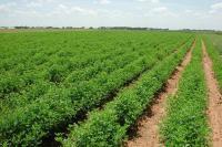 انخفاض اسعار المنتجين الزراعيين 18%