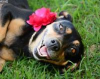 أنثى كلب تشعل الإنترنت بجلسة تصوير خلال حملها - صور