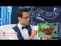 طفل أردني يتحدى أينشتاين بمعلوماته ! فيديو