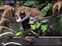 بالفيديو: نمر يهاجم سكان قرية هندية