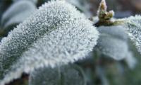 أجواء باردة وتحذير من تشكل الصقيع