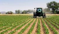 نقص العمالة يهدد بفشل الموسم الزراعي