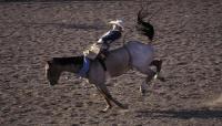 رفسة حصان تنقذ فارسا من الموت