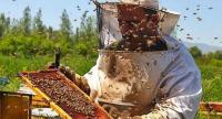 ارتفاع إنتاج الأردن من العسل 3.7%