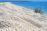 ظهور كائن غريب في شواطئ أستراليا - صورة