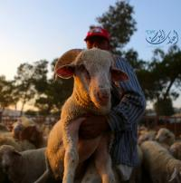 الصناعة: لا شكاوى من ممارسات مخلة بالمنافسة خلال العيد
