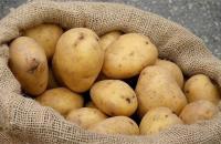 منع دخول 100 طن من البطاطا المحلية