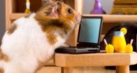 فأر يتفوّق على كبار المستثمرين في العملات الرقمية - فيديو