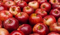 العثور على نوع غريب وجديد من التفاح