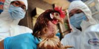 الصحة العالمية تتحدث عن سلالة جديدة لانفلونزا الطيور