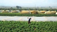 الزراعة: مسودة انشاء مركز الأمن الغذائي الإقليمي امام مجلس الوزراء